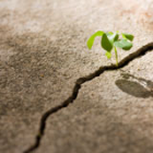 resiliencia-emprendedor-inconsciencia-cisne-negro.png