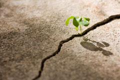 resiliencia-emprendedor-inconsciencia-cisne-negro emprendedores