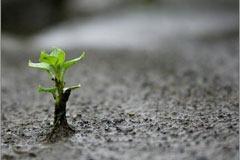 ecosistema-emprendedor-propuesta-valor-modelo-negocio