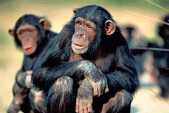 monos-innovacion-jaula-platano-intraemprendimiento