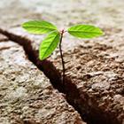 ecosistema-inversion-Israel-venture-capital-startups_thumb.png