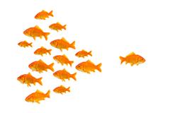 mercado-masas-early-adopter-lanzar-nuevo-producto-nicho