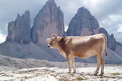vacas-sagradas-hamburguesas