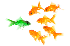 fish like me essay Like a fish in water: an essay on the benefits of government that nobody notices 1 acknowledgements i would like to thank my colleagues at schwarzman scholars at.