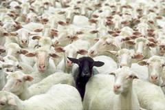 manifiesto-contra-la-mediocridad-ovejas